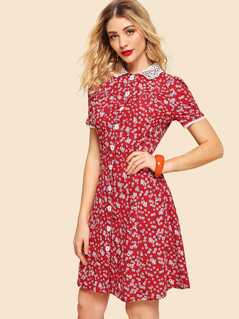 Contrast Lace Collar Floral Fit & Flare Dress