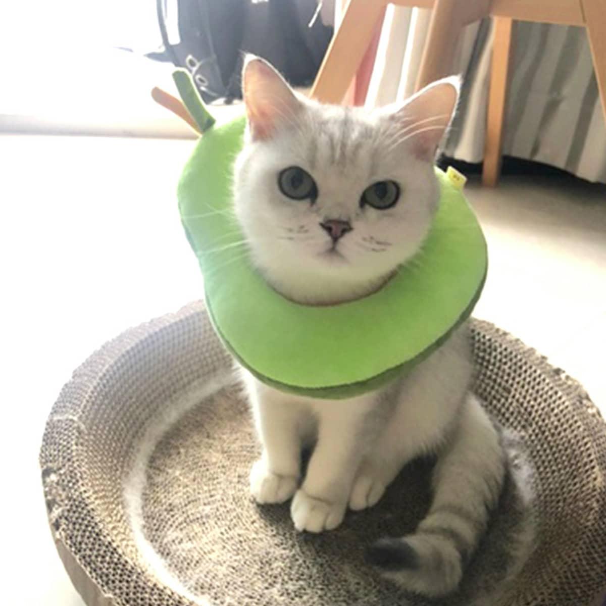 1шт защитный воротник для кошек в форме