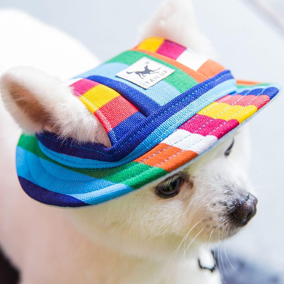 Colorful Dog Baseball Cap