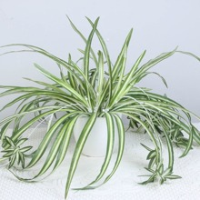 Artificial Chlorophytum 1pc