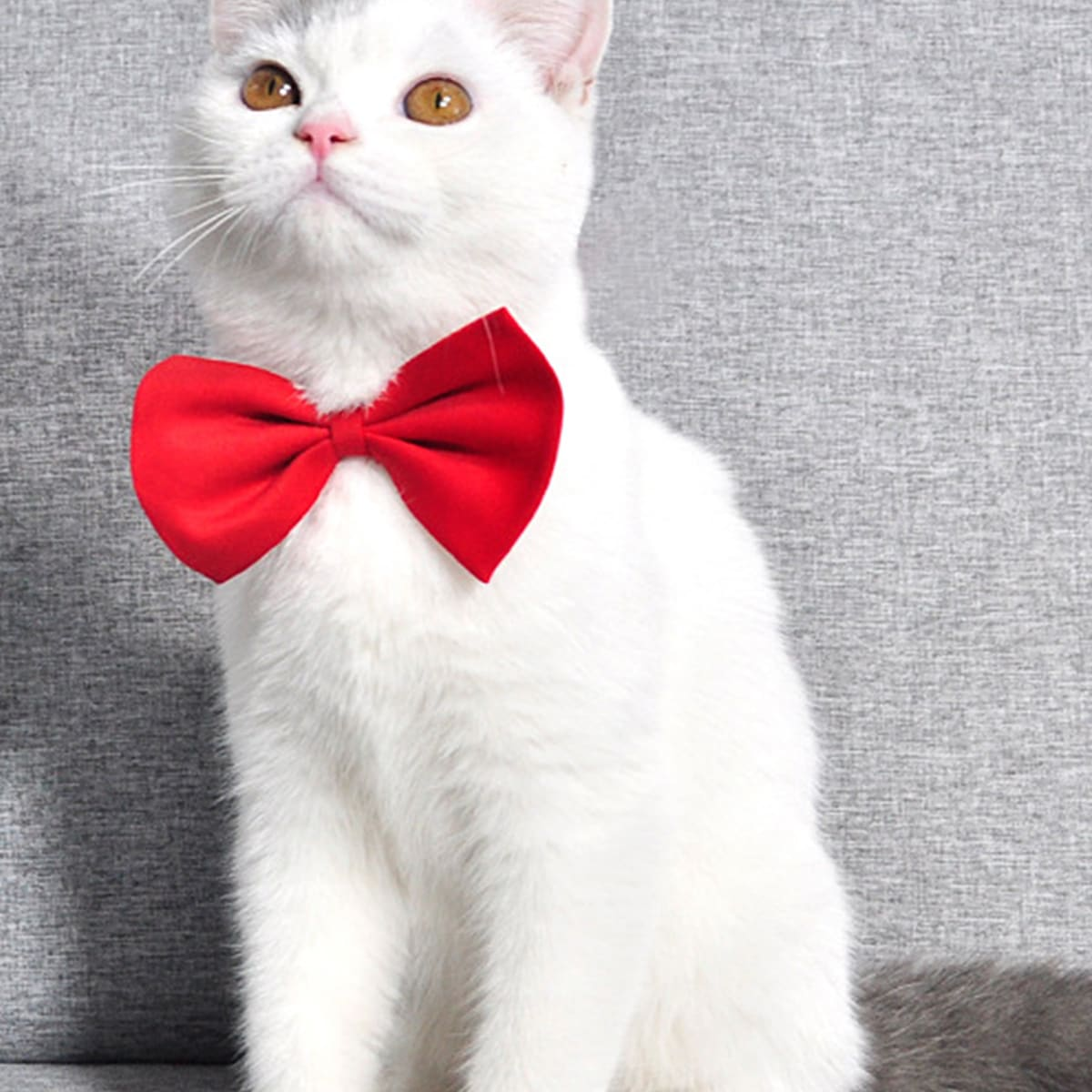 1 Stück Einfarbige Schleife für Katze