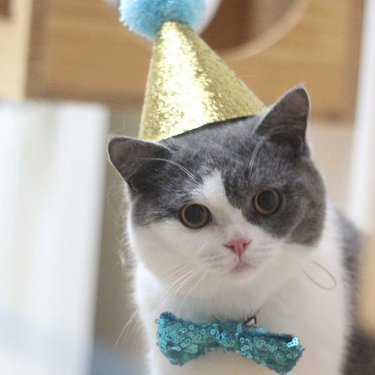 1pz Cappello compleanno gatto e 1pz fiocco