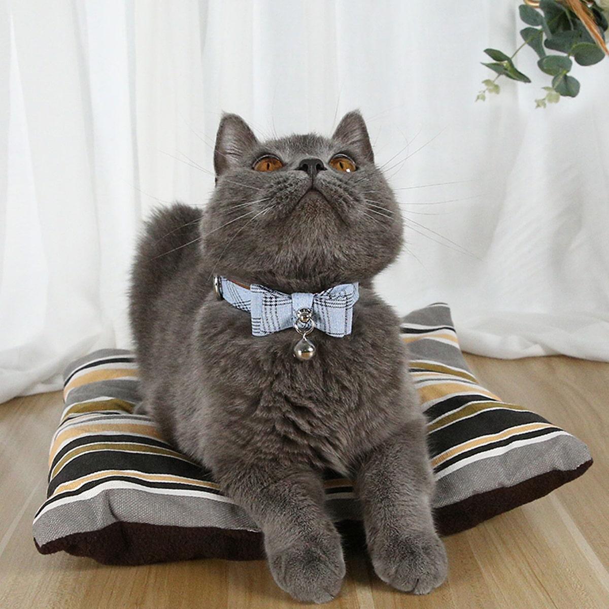 1 Stück Katzenhalsband mit Glocke