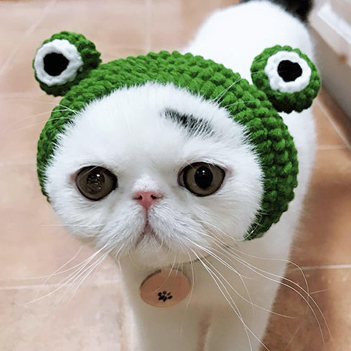 Accessorio per gatto Verde