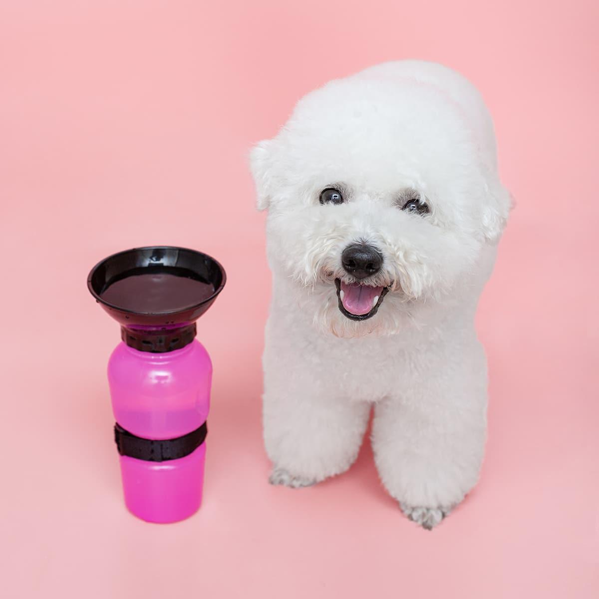 1 Stück Tragbare Wasserflasche im Freien für Hunde