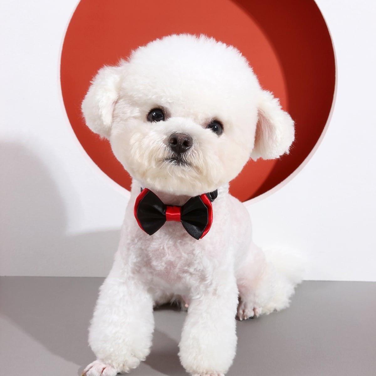 1 Stück zweifarbiges Hund Band mit Schleife