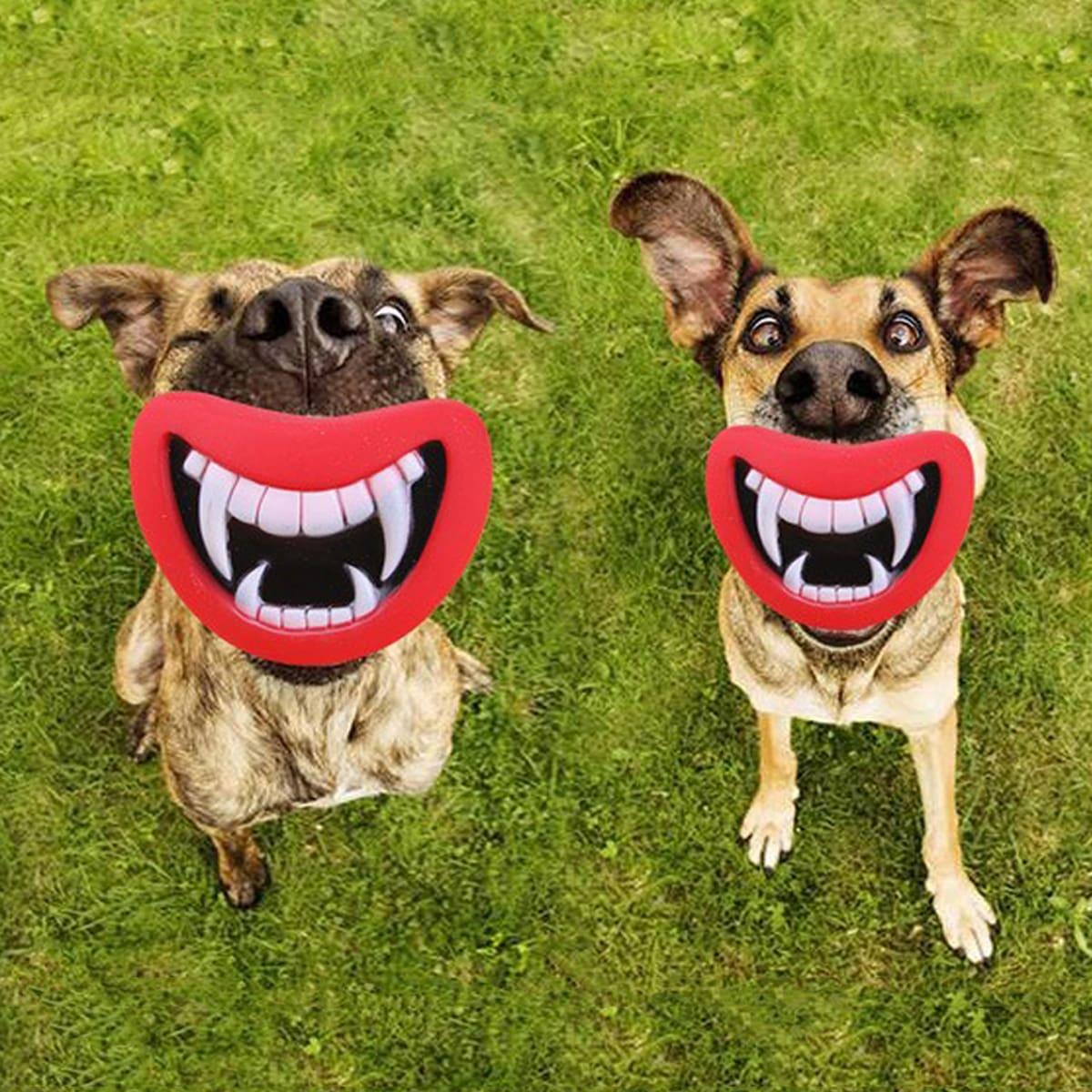1 Stück Kreativer Klangspielzeug für Hunde