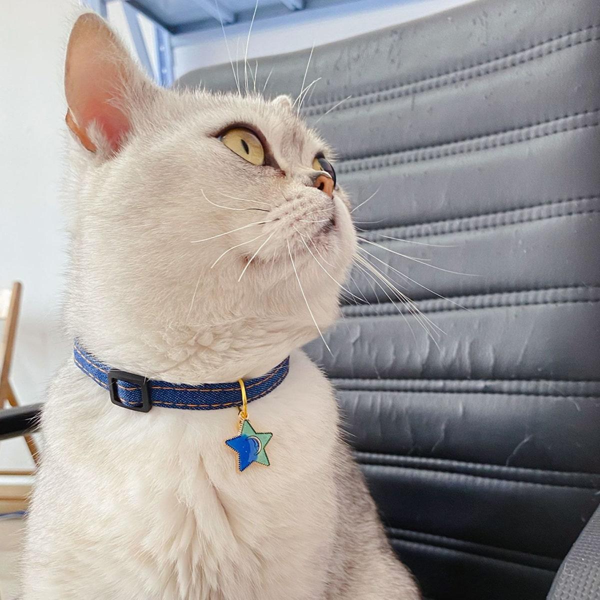 1 Stück Katzenhalsband mit Stern Anhänger und Klingel