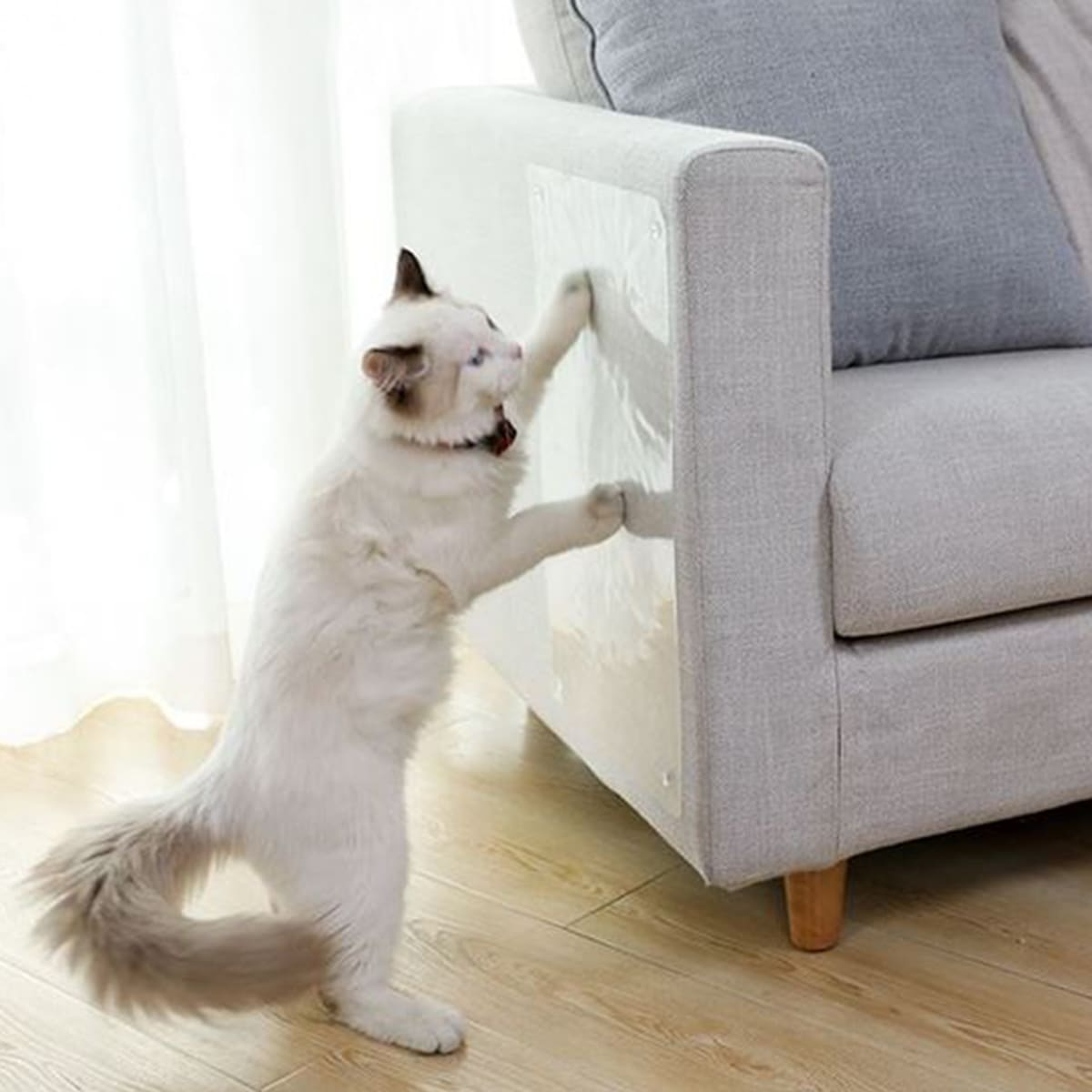 2 Stücke Katze transparenter Anti-Kratz-Aufkleber
