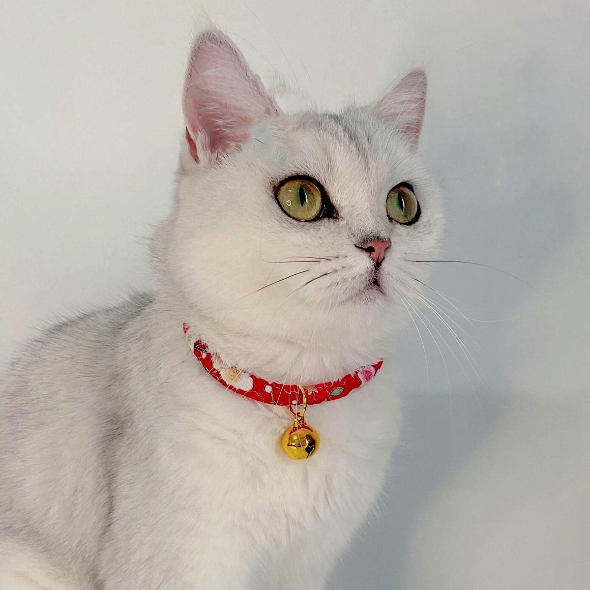 1 Stück Katzenhalsband mit Glocke Dekor