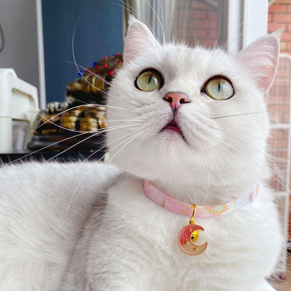 Halskette mit Stern Muster für Katze