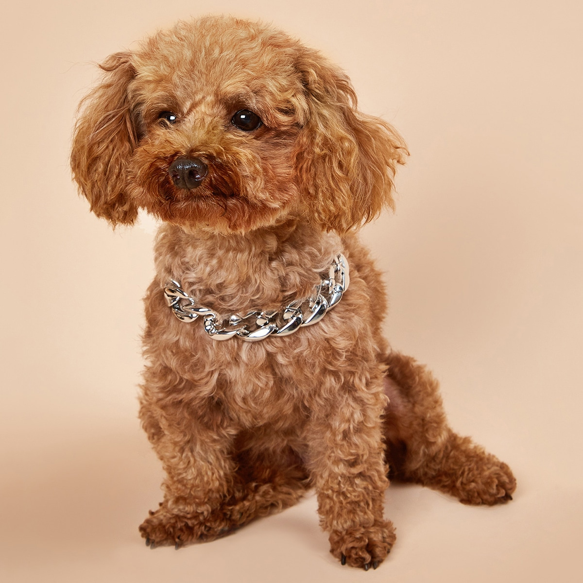 1 Stück Hund Halsband mit Kette