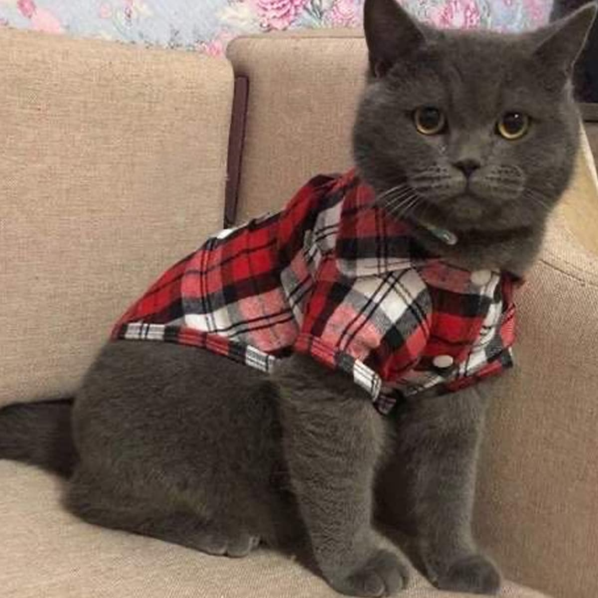 1 Stück Katze Shirt mit Karo Muster