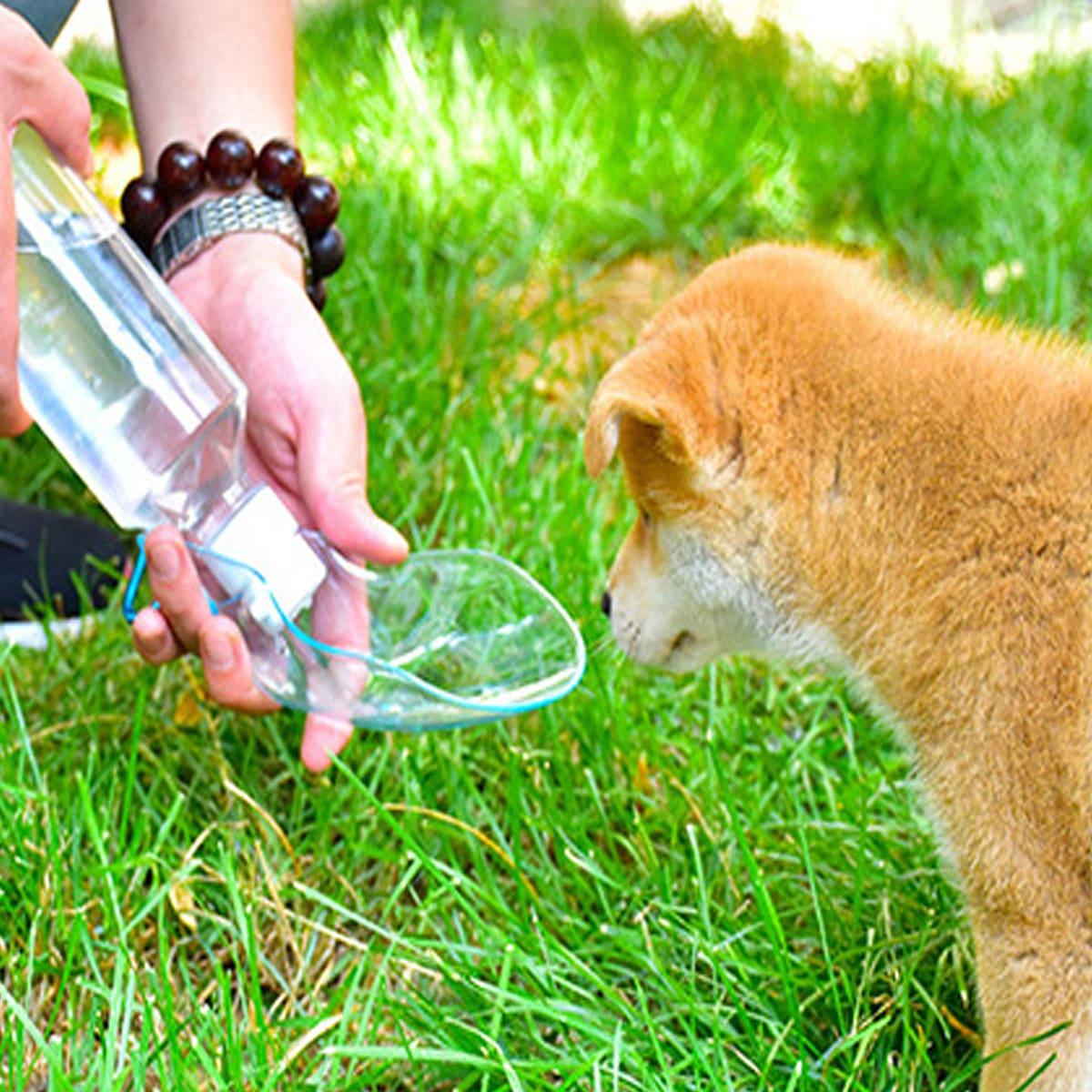 Hund Handwasserzufuhr