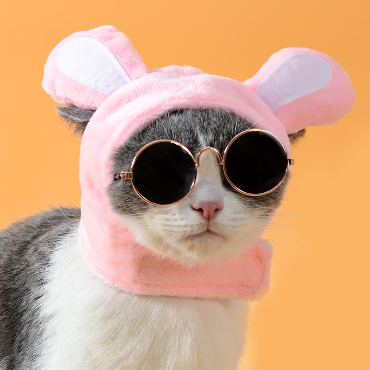 1 pièce Chapeau pour chat avec oreilles & 1 paire Lunettes de soleil pour chat