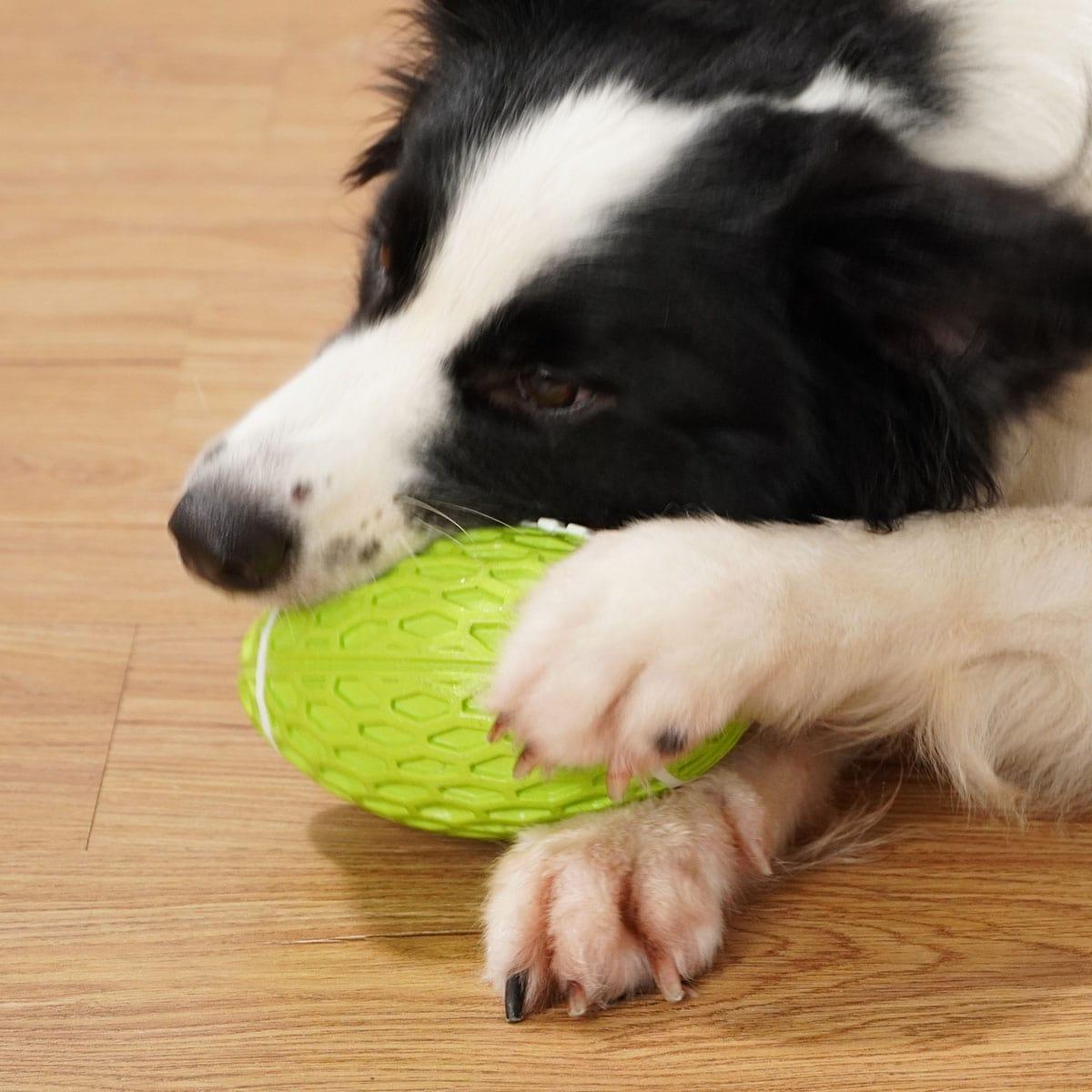 Klangspielzeug in Rugbyform für Hunde