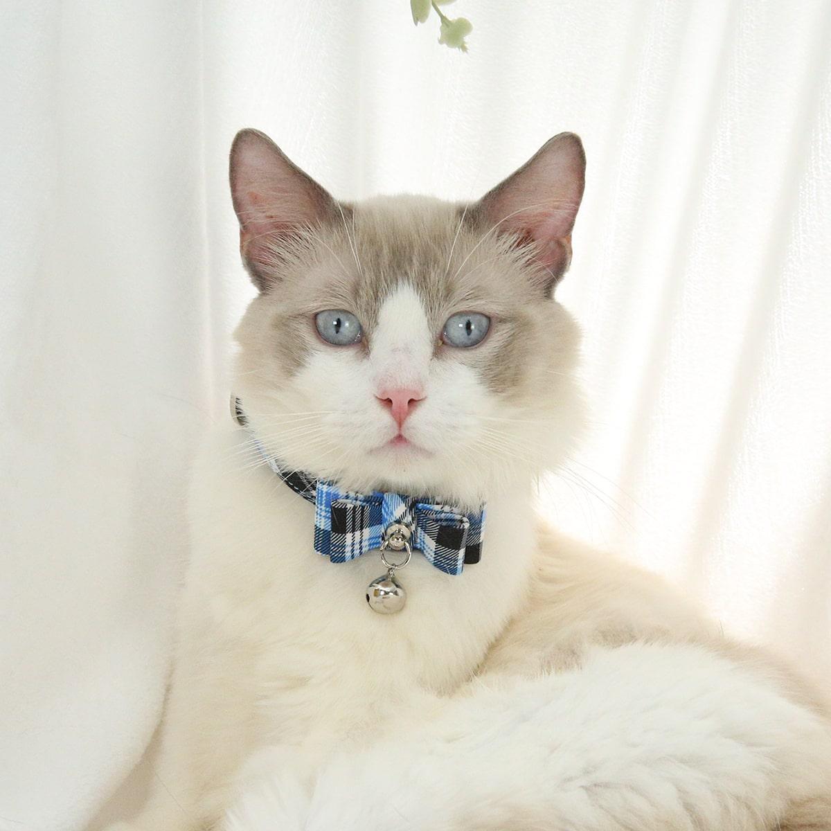 Halsband mit Karo Muster für Katze