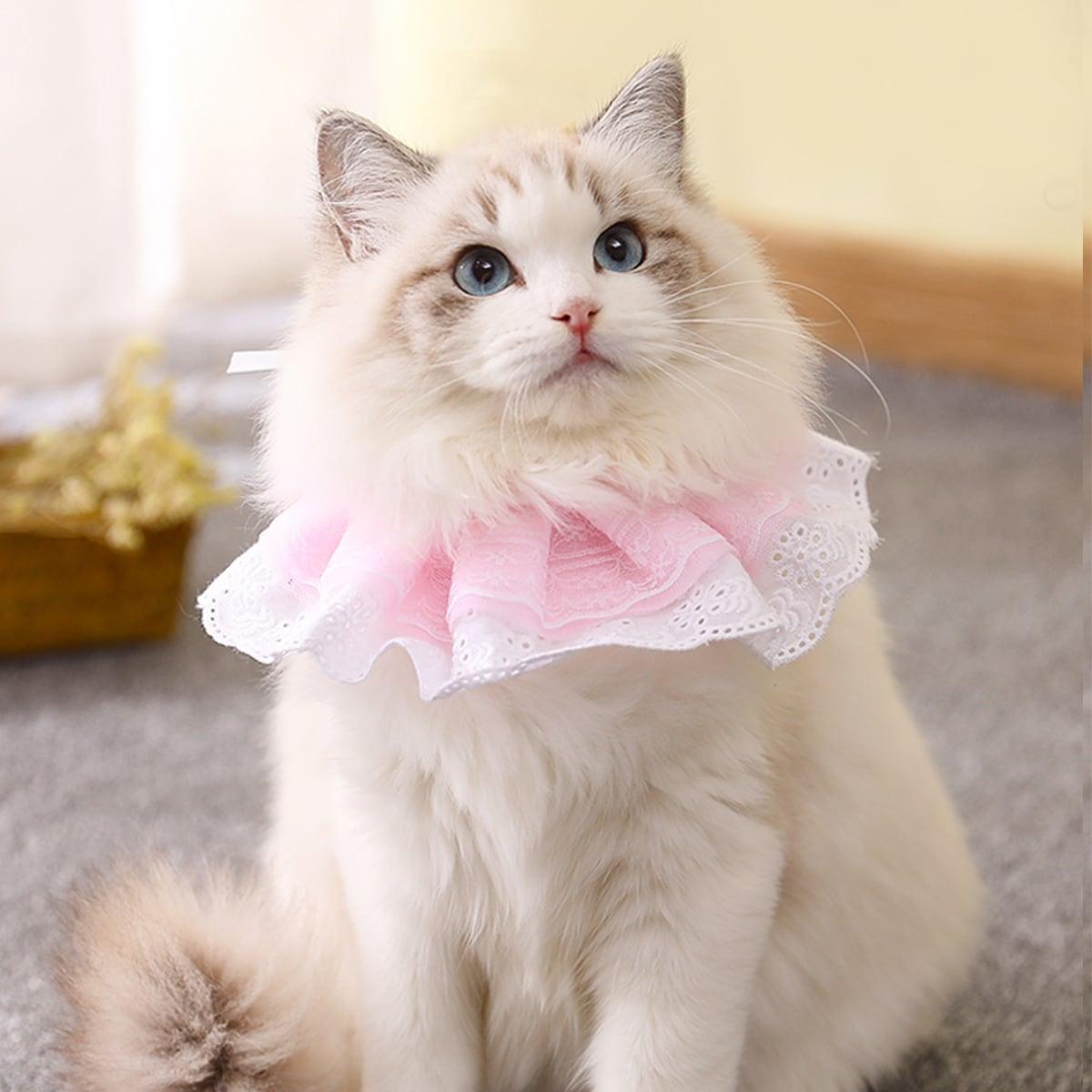 Katze Halsband mit Blumen Dekor und Spitzen