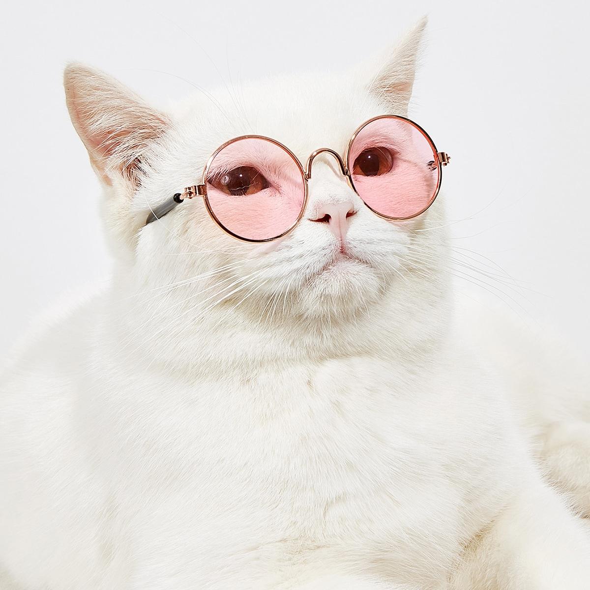 1pair Round Lens Pet Glasses