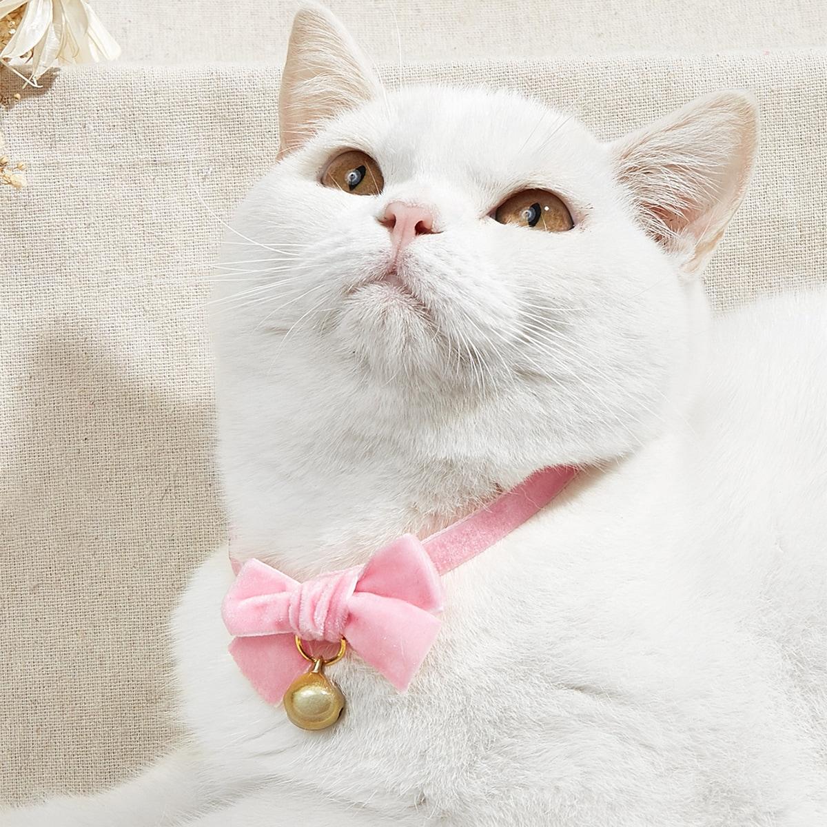 Samt Haustier Halskette mit Schleife Dekor