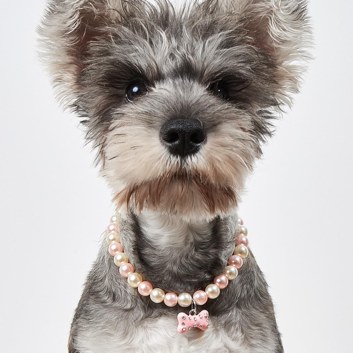 Haustier Halskette mit Knochen und Kunstperlen Dekor
