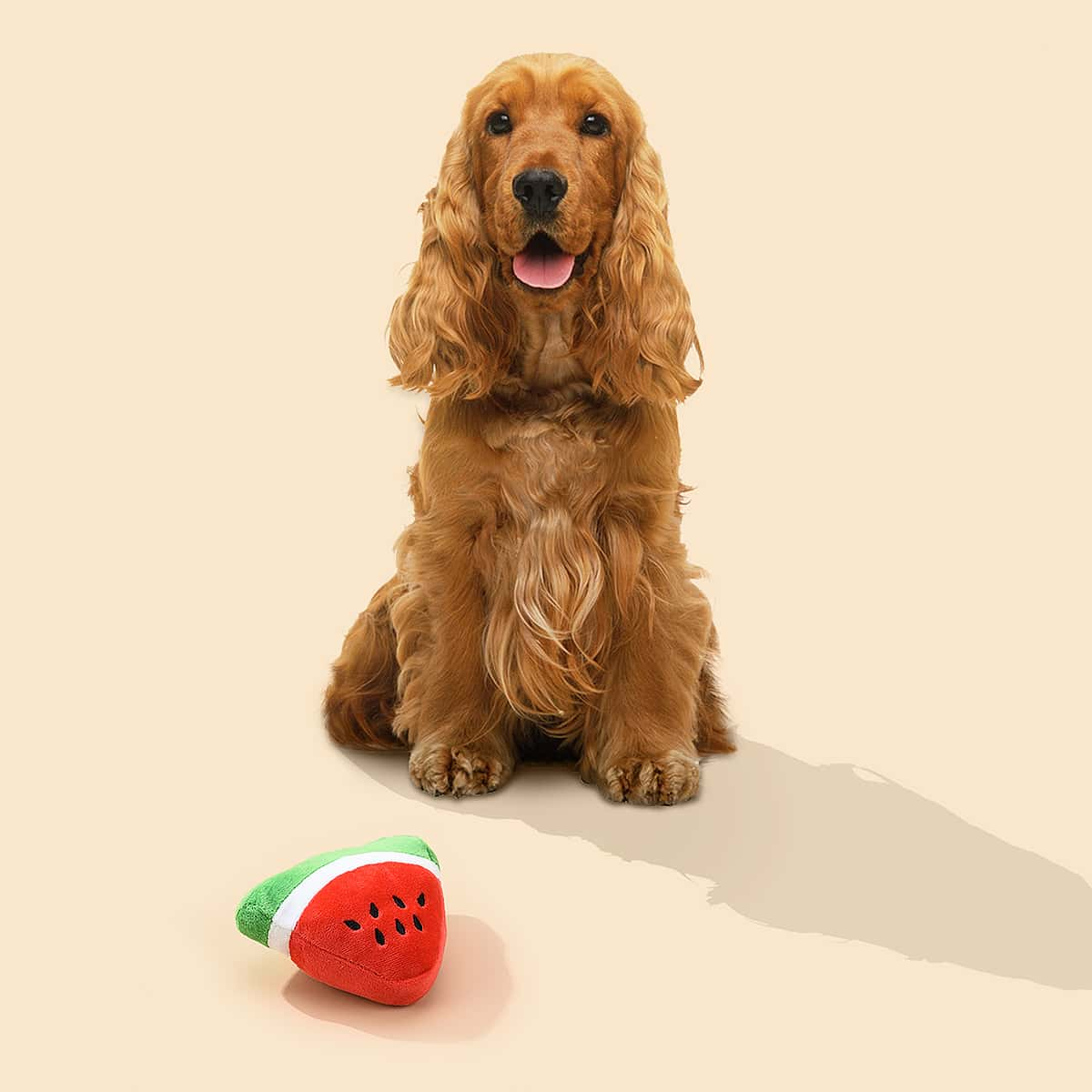 Haustier-Klangspielzeug in Wassermelonenform