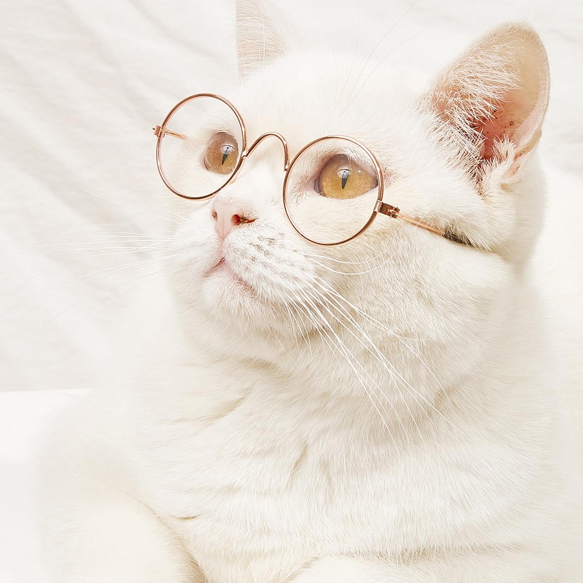 1 paio occhiali per animale domestico con cornice metallica