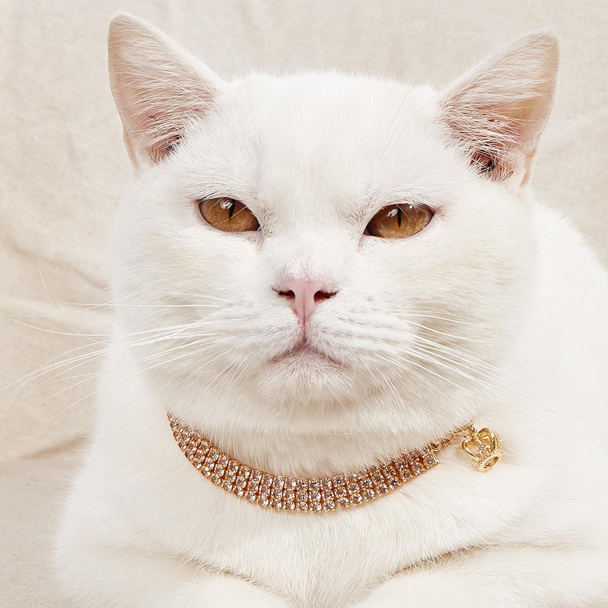Collana per animale domestico con strass e corona
