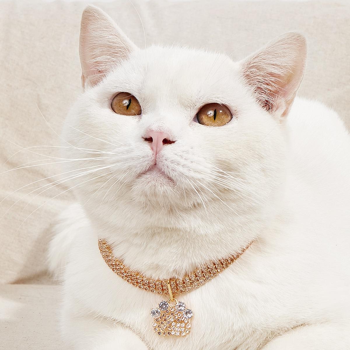 Halskette mit Klaue Anhänger für Haustiere