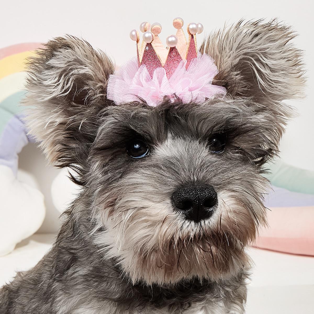 Pearl Crown Pet Birthday Hat