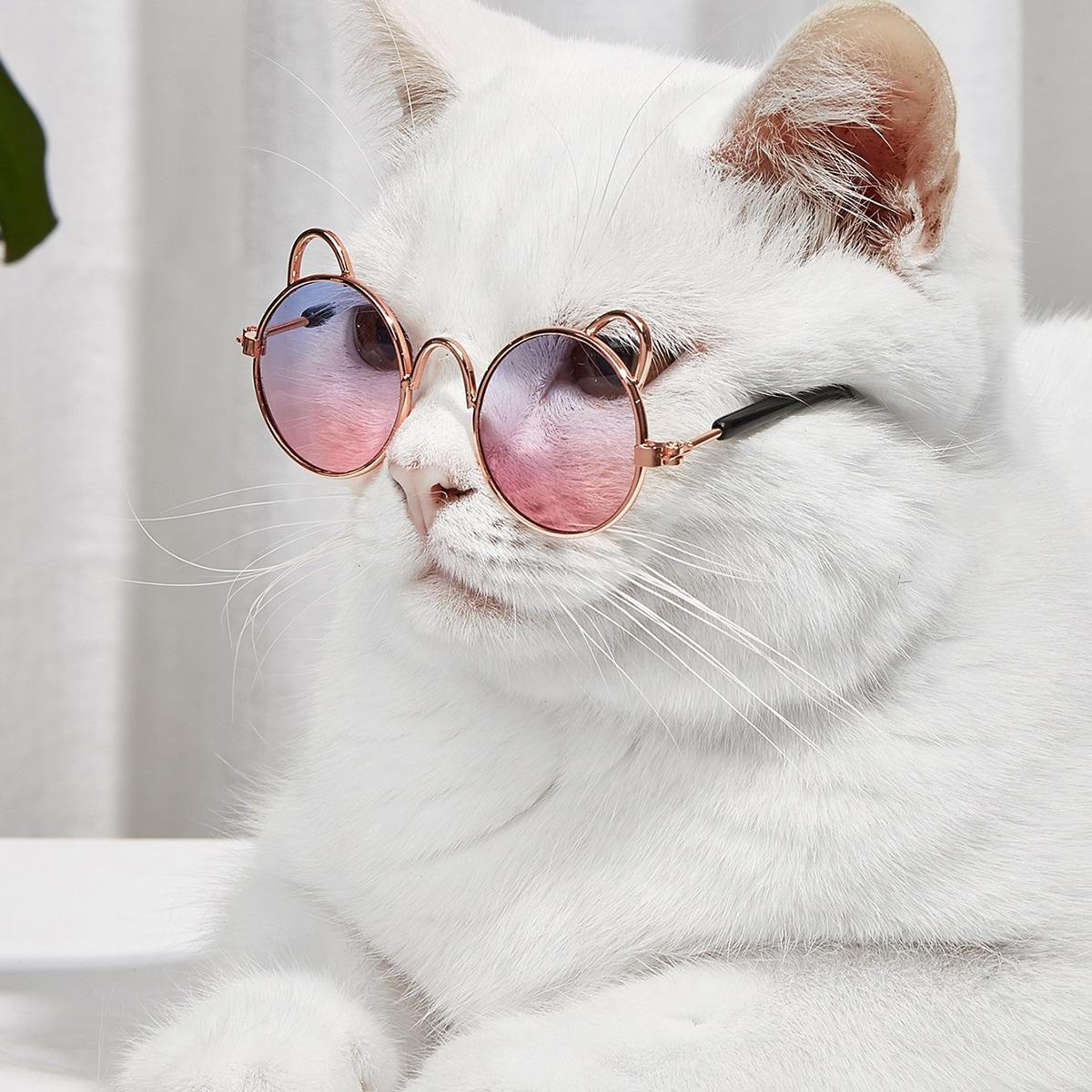 1 paire Lunettes à verres teintés pour animaux de compagnie