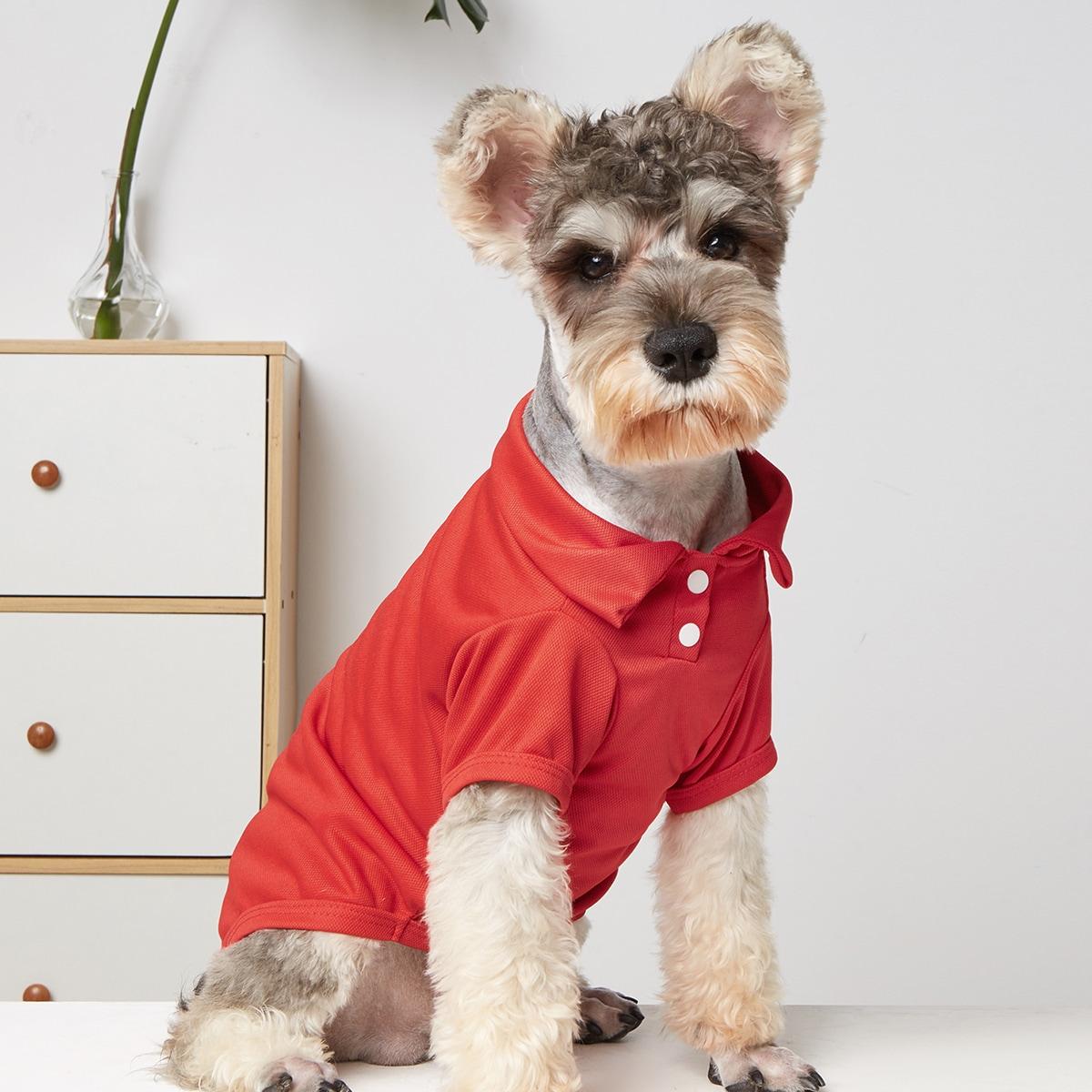 Hemd für Haustiere