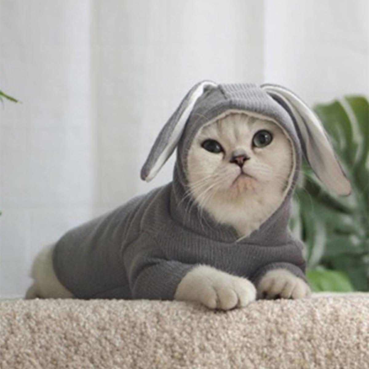 Felpa con cappuccio per animali domestici con dettaglio dell'orecchio 1pc