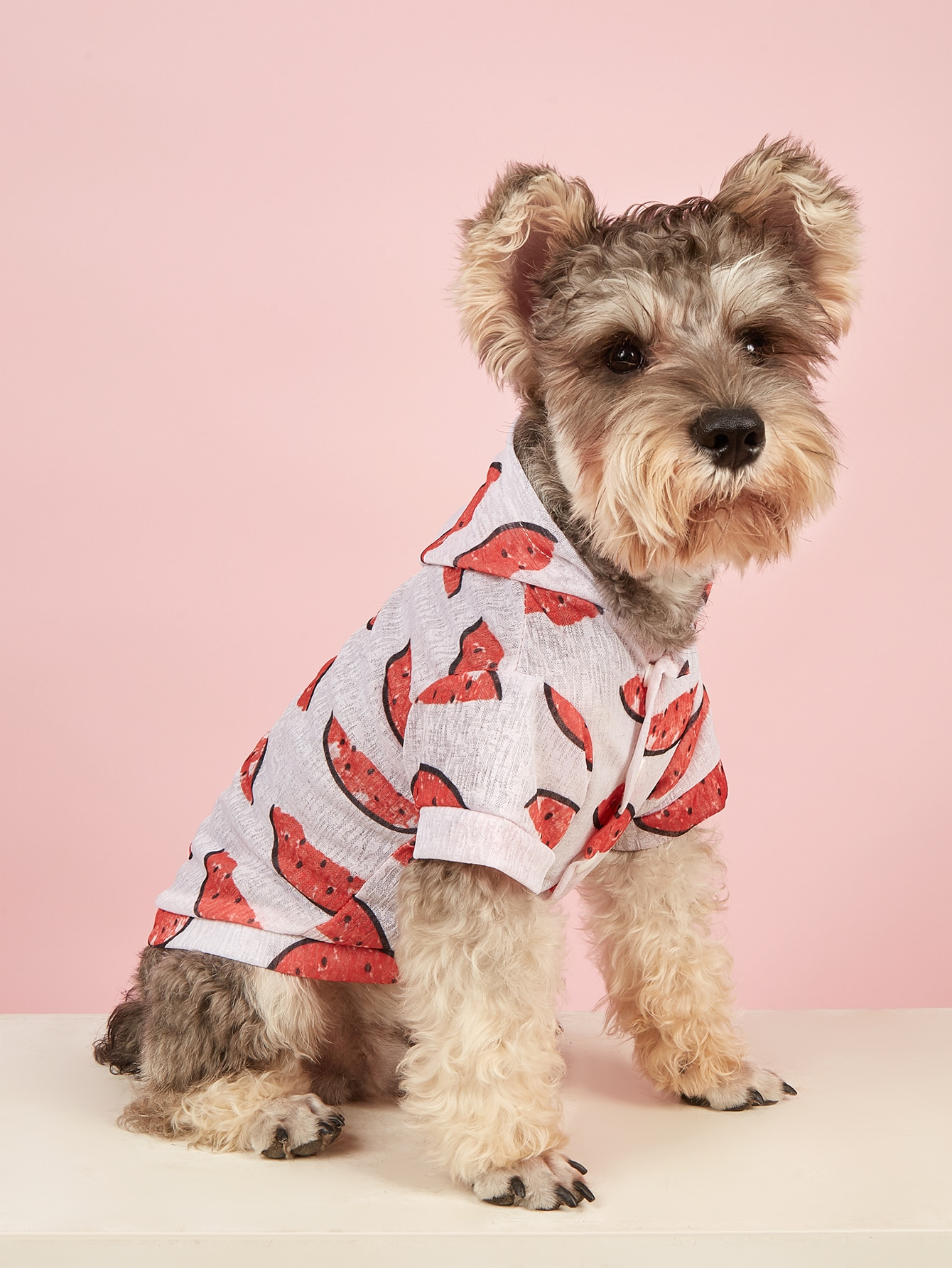 watermelon print pet jacket