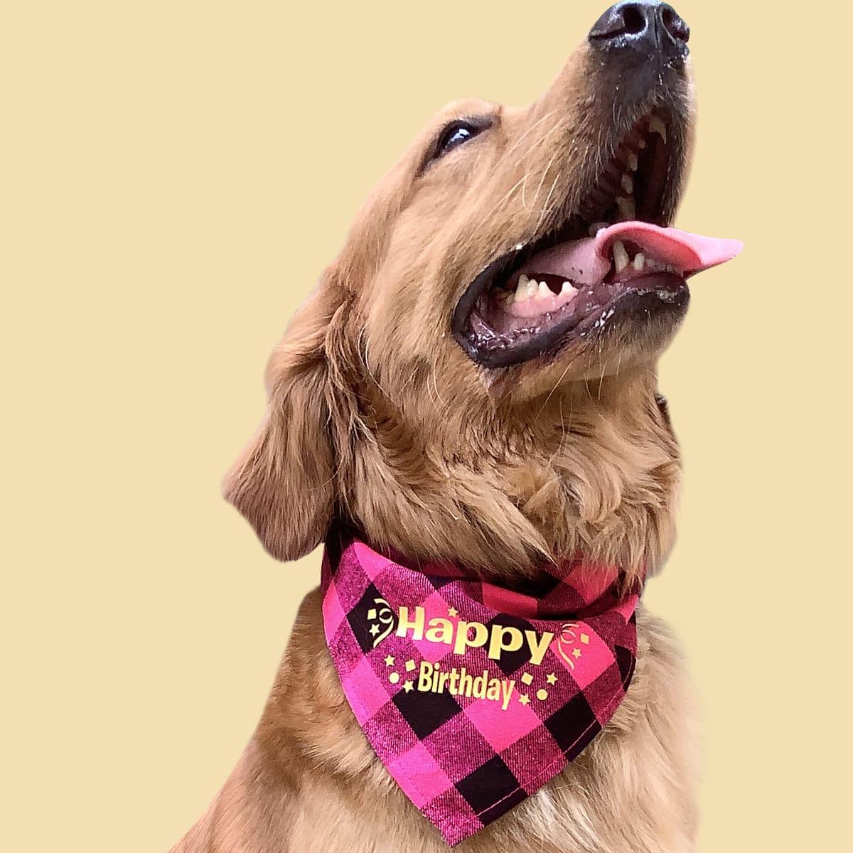 Pañuelos para Mascotas Bufanda Frase