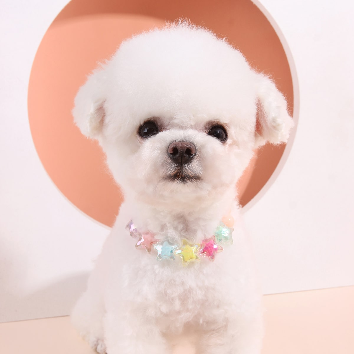 Star Beaded Pet Necklace