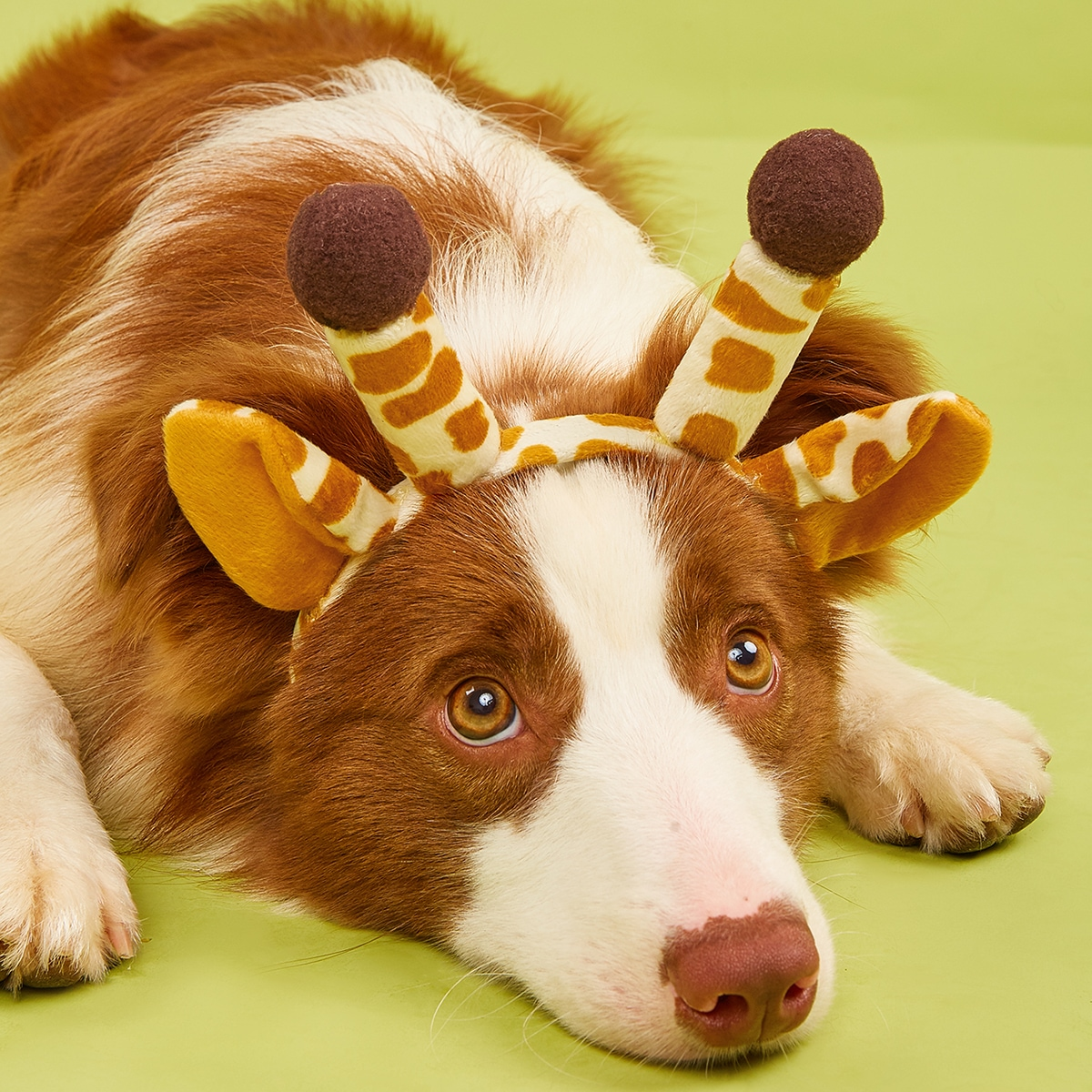 Giraffe Design Pet Hair Hoop, SHEIN  - buy with discount